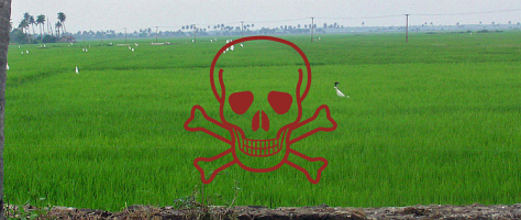 Green field with red skull and crossbones in superimposed