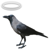 Crow with halo